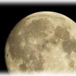 お月見について~今年の十五夜はいつ?何をお供えすればいい?
