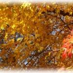 箱根の紅葉を楽しむには~初めての箱根おススメコースとスポット