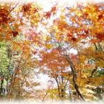 六義園の紅葉がライトアップされるのはいつからいつまで?